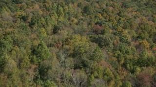 AX91_152 - 4K stock footage aerial video of flying over forest in fall, East Haven, Connecticut