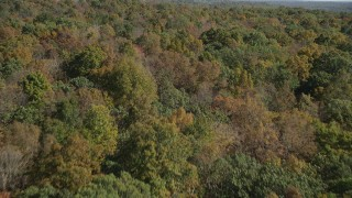 AX91_154 - 4K stock footage aerial video of flying over lush forest in autumn, East Haven, Connecticut