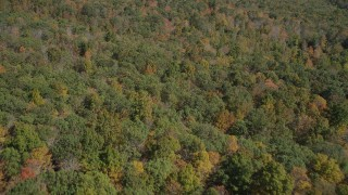 AX91_165 - 4K stock footage aerial video of flying over lush forest in autumn, Lake Gallard, Connecticut