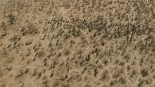 CAP_026_031 - HD stock footage aerial video of a herd of African buffalo in the savanna, Zimbabwe