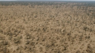 CAP_026_032 - HD stock footage aerial video of approaching a herd of African buffalo in the savanna, Zimbabwe