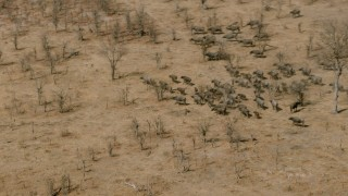 CAP_026_034 - HD stock footage aerial video of circling a herd of African buffalo in the savanna, Zimbabwe