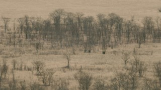 CAP_026_045 - HD stock footage aerial video of passing by elephants in the savanna, Zimbabwe