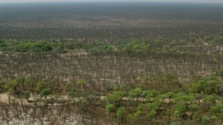 CAP_026_052 - HD stock footage aerial video of flying over trees and brush lining rivers in the open savanna, Zimbabwe