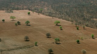 CAP_026_058 - HD stock footage aerial video of orbiting green trees and fields in the open savanna, Zimbabwe