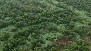 CBAX01_043 - HD stock footage aerial video of flying over thick, green trees, Butterfield Stage Trail Park, California