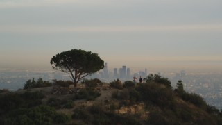 DCLA_005 - 5K stock footage aerial video fly over lone tree on a mountain to reveal the Downtown Los Angeles skyline at sunset, California