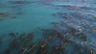 DCSF11_024 - Aerial stock footage of 5K Aerial Video Flying away from floating kelp, Pacific Ocean, Big Sur, California