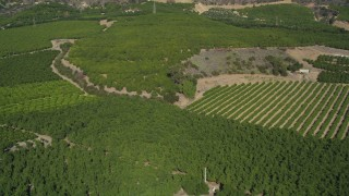 DFKSF01_013 - 5K stock footage aerial video of flying by fields of orchards on farms, Fillmore, California