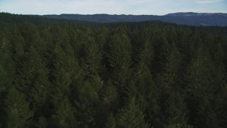 DFKSF06_136 - 5K stock footage aerial video of flying over evergreen forest and mountains at Point Reyes National Seashore, Olema, California