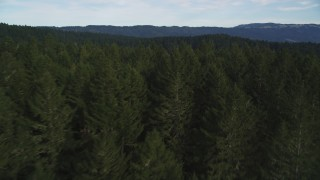 DFKSF06_137 - 5K stock footage aerial video fly over evergreen forest to approach mountain ridge at Point Reyes National Seashore, Olema, California
