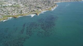 DFKSF15_119 - 5K stock footage aerial video of kelp forests near coastal neighborhoods, Santa Cruz, California