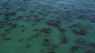 DFKSF15_121 - 5K stock footage aerial video of flying over kelp forests, Santa Cruz, California
