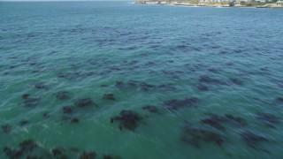 DFKSF15_122 - 5K stock footage aerial video of flying over kelp forests, tilt to reveal coastline, Santa Cruz, California