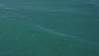DFKSF15_148 - 5K stock footage aerial video orbit seals and seagulls in the ocean, Moss Landing, California