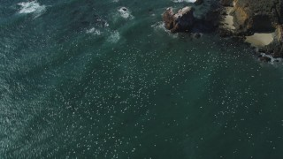 DFKSF16_099 - 5K stock footage aerial video of tracking flocks of seagulls flying over the ocean near coast, Big Sur, California