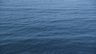 DFKSF16_133 - 5K stock footage aerial video of circling dolphins swimming in the Pacific Ocean, California
