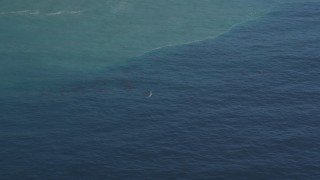 DFKSF16_142 - 5K stock footage aerial video of flying by a whale surfacing in the Pacific Ocean, zoom to a closer view, California