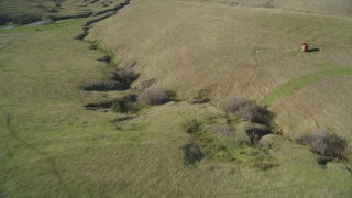 DFKSF16_148 - 5K stock footage aerial video of a reverse view of cattle and hills in San Luis Obispo County, California