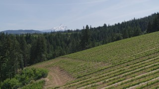 DX0001_000152 - 5.7K stock footage aerial video of Mount Hood seen from hillside Phelps Creek Vineyards in Hood River, Oregon
