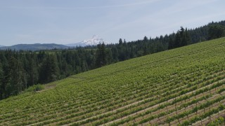 DX0001_000153 - 5.7K stock footage aerial video of a reverse view of Mount Hood seen from hillside Phelps Creek Vineyards in Hood River, Oregon