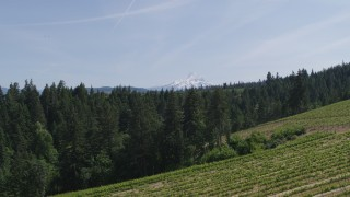 DX0001_000161 - 5.7K stock footage aerial video of flying over grapevines at Phelps Creek Vineyards toward Mount Hood in Hood River, Oregon