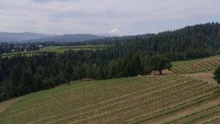 DX0001_000342 - 5.7K stock footage aerial video fly low over grapevines, with a view of Mt Hood, Hood River, Oregon