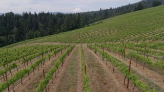 DX0001_000344 - 5.7K stock footage aerial video of a low altitude view of grapevines, Hood River, Oregon