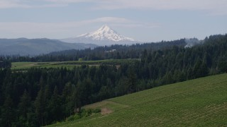 DX0001_000351 - 5.7K stock footage aerial video descend toward vineyards and Mt Hood, Hood River, Oregon