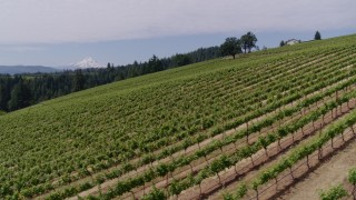 DX0001_000387 - 5.7K stock footage aerial video fly over grapevines and pan to reveal Mt Hood, Hood River, Oregon