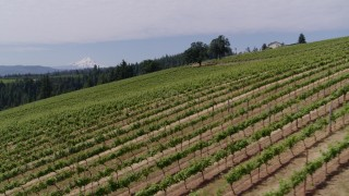 DX0001_000388 - 5.7K stock footage aerial video fly low altitude over a hillside with grapevines toward Mt Hood in the distance, Hood River, Oregon