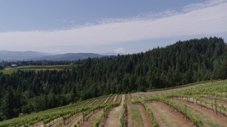 DX0001_000407 - 5.7K stock footage aerial video fly over fields of grapevines and pan to reveal Mt Hood, Hood River, Oregon