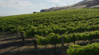 DX0001_000490 - 5.7K stock footage aerial video of flying low over grapevines at Maryhill Winery in Goldendale, Washington