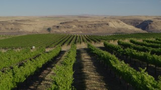 DX0001_000496 - 5.7K stock footage aerial video fly over the Maryhill Winery vineyard toward Columbia River in Goldendale, Washington