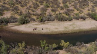 DX0002_141_003 - 5.7K stock footage aerial video of orbiting a group of horses beside a shallow desert river
