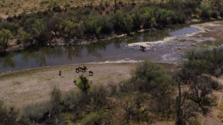 DX0002_141_004 - 5.7K stock footage aerial video fly away from and orbit a group of horses beside a shallow desert river