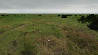 DX0002_148_003 - 4K stock footage aerial video of flying low over tall grass in Long Beach, Washington