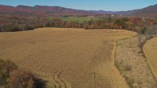 DX0002_216_039 - 5.7K stock footage aerial video of flying over corn fields in Fort Ann, New York