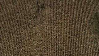 DX0002_216_040 - 5.7K stock footage aerial video of a bird's eye view of corn fields in Fort Ann, New York