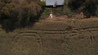 DX0002_216_041 - 5.7K stock footage aerial video of a bird's eye view of corn fields, reveal farm house in Fort Ann, New York