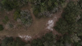 DX0003_234_039 - 5.7K stock footage aerial video of ascending from a forest clearing, Orlando, Florida