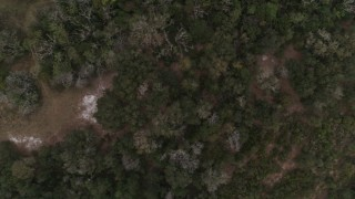 DX0003_234_040 - 5.7K stock footage aerial video overhead view of a forest clearing and trees, reveal river, Orlando, Florida