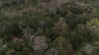 DX0003_234_050 - 5.7K stock footage aerial video fly low over forest trees, Orlando, Florida