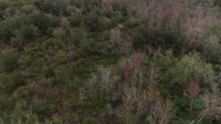 DX0003_234_051 - 5.7K stock footage aerial video a reverse view of forest trees, Orlando, Florida