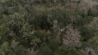 DX0003_234_060 - 5.7K stock footage aerial video slowly flying over treetops in the forest, Orlando, Florida
