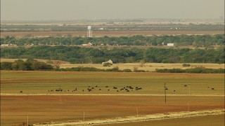 HDA12_079 - 1080 aerial stock footage video of cattle grazing in fields in Oklahoma