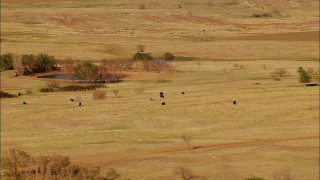 HDA12_116 - 1080 stock footage aerial video of cows grazing near a pond in Oklahoma