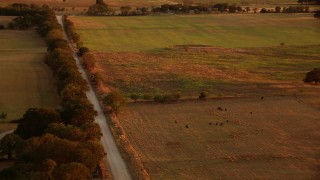HDA12_156 - 1080 stock footage aerial video of farmland and country road, tilt to grazing cows at sunset in Texas