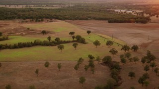 HDA12_161 - 1080 stock footage aerial video of cows grazing on a pasture at sunset in Texas