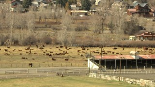 HDA13_350 - HD stock footage aerial video of cattle in a field in Ridgway, Colorado